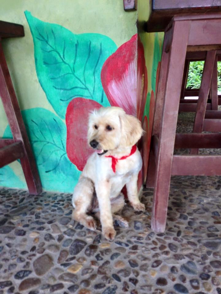 Maya,the Ak'Bol Guard dog :)