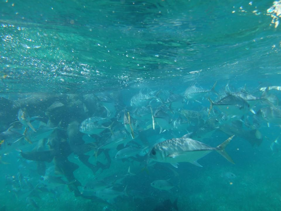 SnorkelingBelize