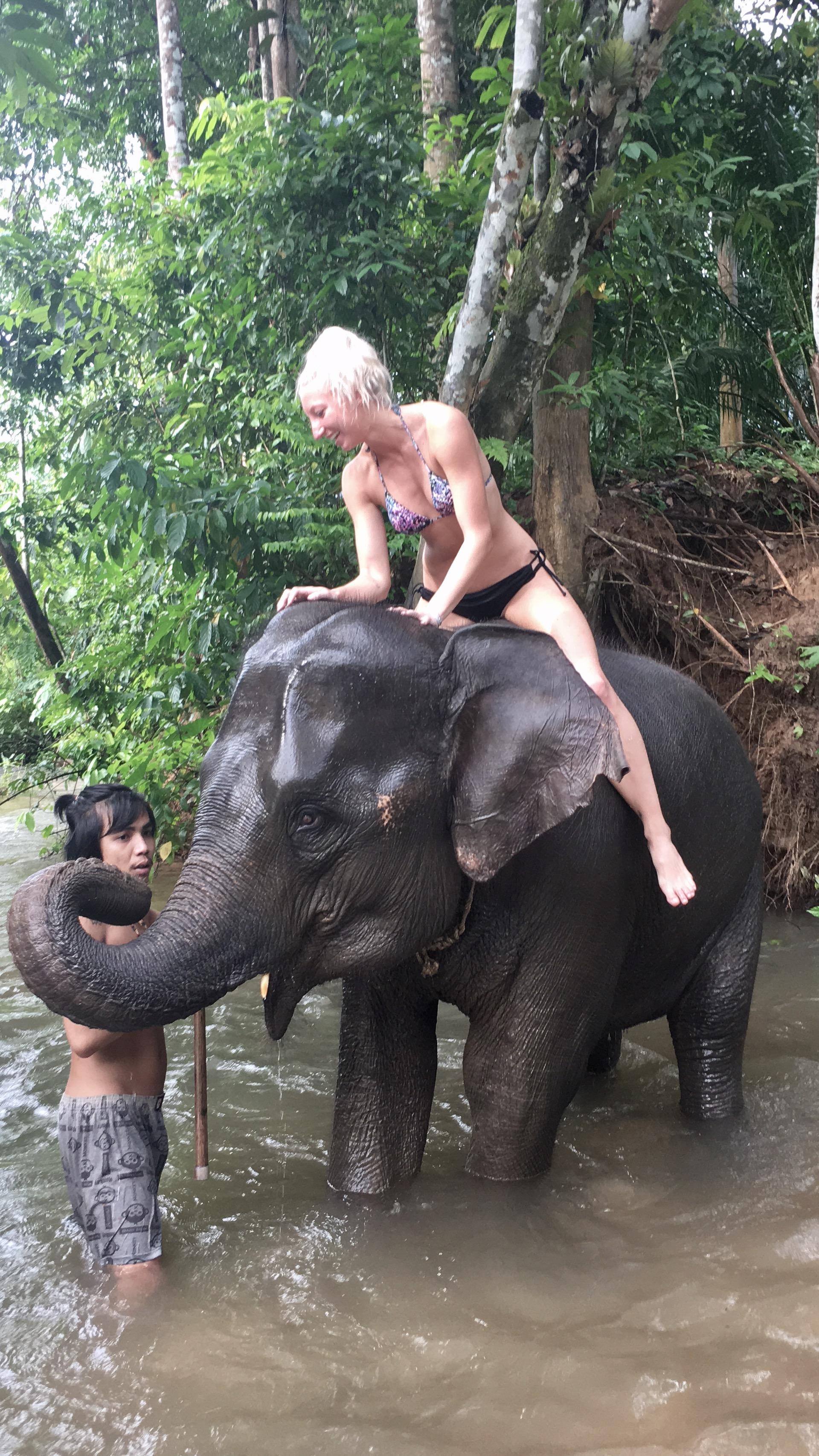 nina-baby-elephant-4